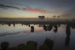 Coen-misty-morning-woods