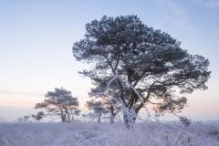 Kalmthoutste heide - winter - 2 (1 van 1) verkleind