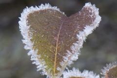 Kalmthoutste heide - winter - 39 (1 van 1) verkleind
